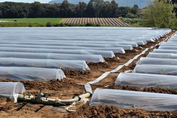 Campo con file di serre a protezione delle piante