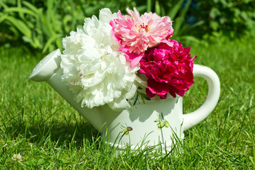 Watering with a bouquet of peonies on the green grass