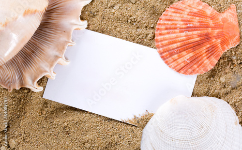 Seashells with sand