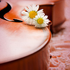 Vintage background with violin and daisy