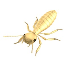 realistic 3d render of termite nymph