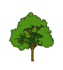Tree in cartoon style isolated on white background