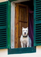 Hund sieht aus einem Fenster
