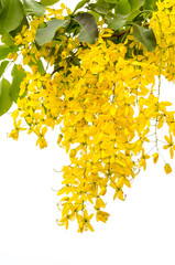Yellow Golden shower