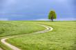 canvas print picture - Baum im Frühling vor Gewitterhimmel