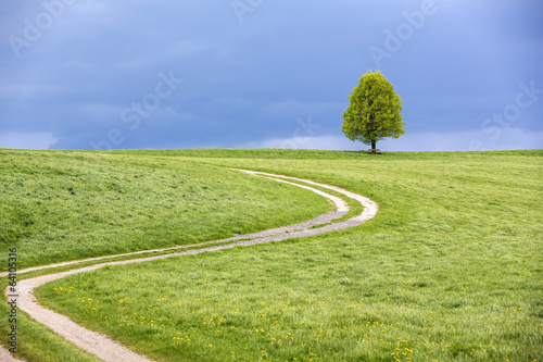canvas print picture Baum im Frühling vor Gewitterhimmel