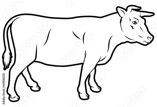 Beef cow illustration