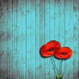 flower poppies and turquoise wood background - Fine Art prints