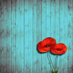 flower poppies and turquoise wood background