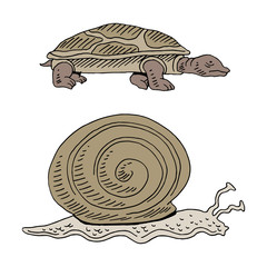 Turtle and Snail Race