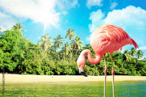 Pink flamingo in the water on a tropical scenery