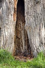 grande albero cavo