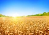 Golden Wheat Field poster