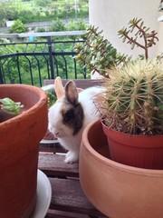 La curiosita' del coniglio