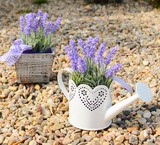 Lavender decoration in the old metal can and in the pot.