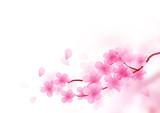 Cherry Blossom Branch Vector