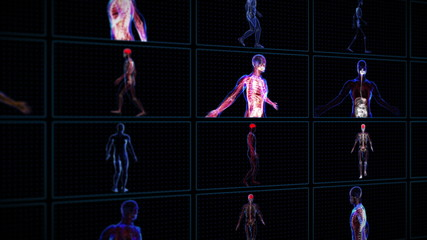 All human body systems in multi screen