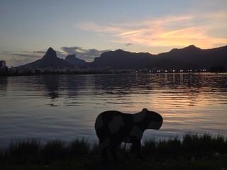 Capivara lagoon sunset Rio de Janeiro