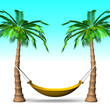 Hammock On Tall Palm Trees With Blue Background