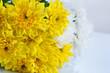 Beautiful chrysanthemum flowers isolated on white