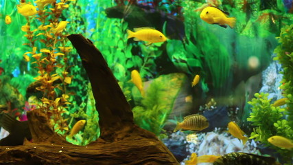 Aquarium plants and fish