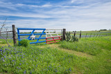 Texas bluebonnet field and a fence with gate in spring