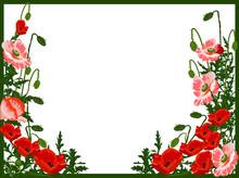 Cadre du coquelicot rouge et vert isolé sur blanc