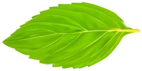 single isolated green mint leaf illustration