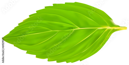 single isolated green mint leaf illustration