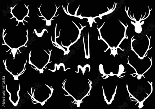 collection of twenty one white antler and horns