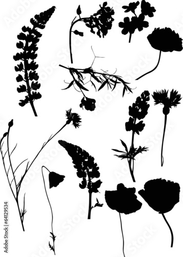twelve isolated black silhouettes of wild flowers