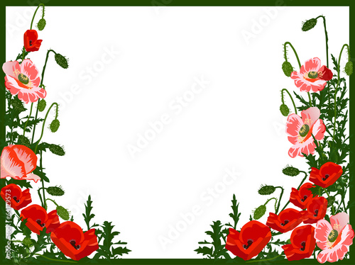 red and green poppy frame isolated on white