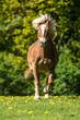 canvas print picture - Pferd auf der Weide