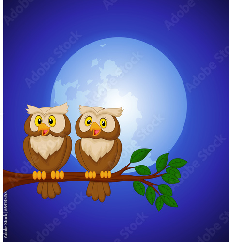 Couple owl cartoon at night