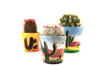 3 cactus in mexican style pot