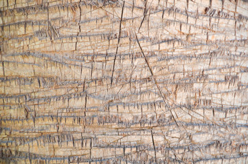 Close up of the bark of a palm tree, background texture pattern.