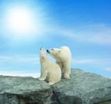 Eisbären in der Sonne