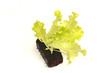 pousses de salade