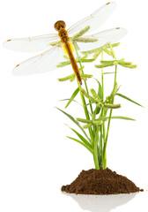 libellule sur herbe sauvage