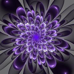 Beautiful lush violet flower on gray background. Computer genera
