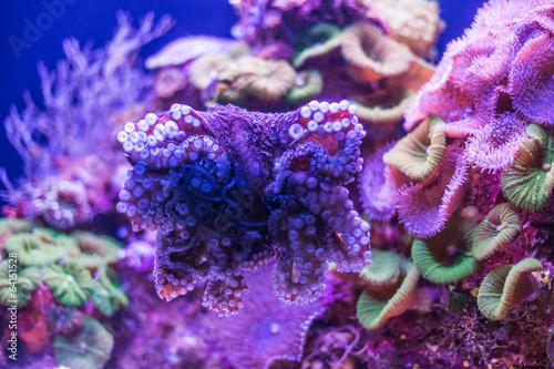 wild underwater world - 64151528