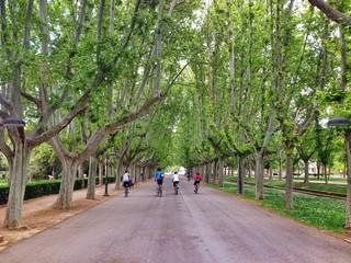 camino dentro del parque