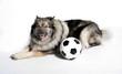 frecher Hund mit Fußball
