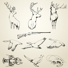 Drawn Wild Animals Collection