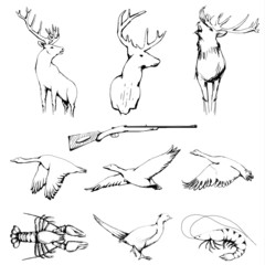 Drawn Wild Animals Collection - Raster