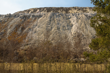 the limestone hillside with a pine tree in the foreground