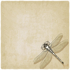 dragonfly insect old background