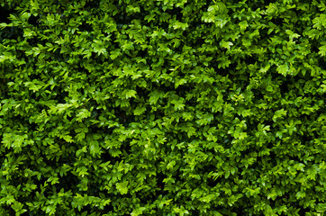 Tiny green leaves background