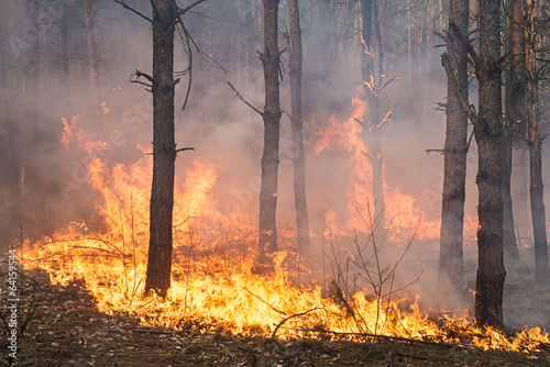 Development of forest fire. Big flame moves up