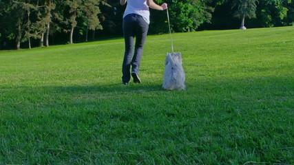 West Highland White Terrier running